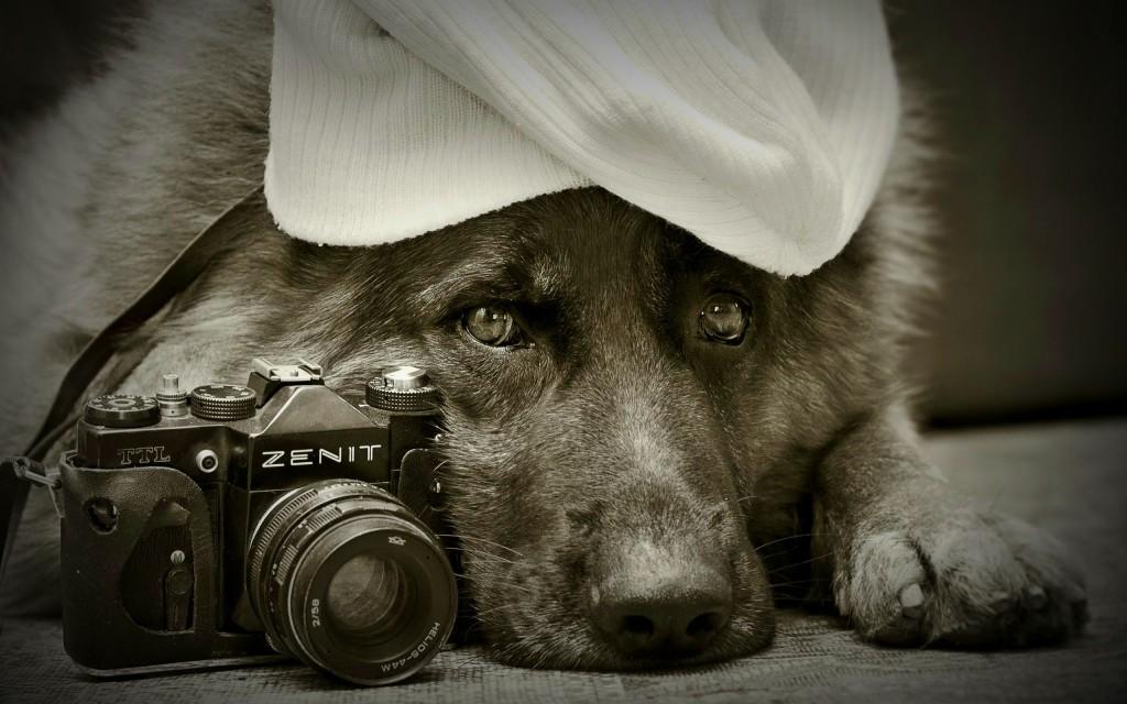Vintage-Dog-German-Shephered-Wallpaper-With-Zenit-Camera