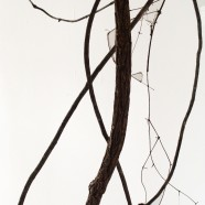 Current Exhibit – MORE THAN MEETS THE EYE, an exhibit of artworks by Dolores Hoffman